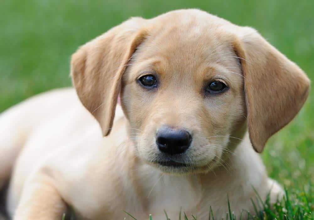 Presuda psu: kriv si jer si pas, a ne mačka