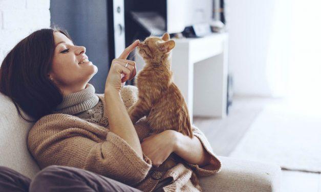Svjetski dan mačaka